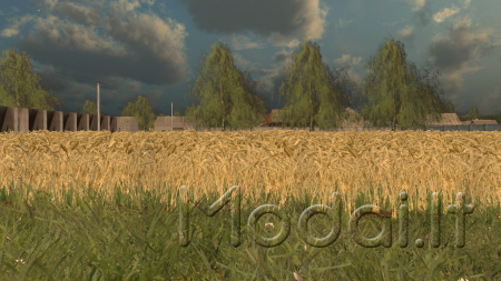 Wheat Barley By-Coufy